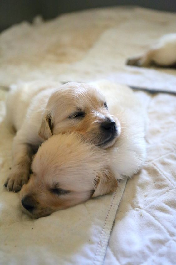 Cute-Twin-Puppies