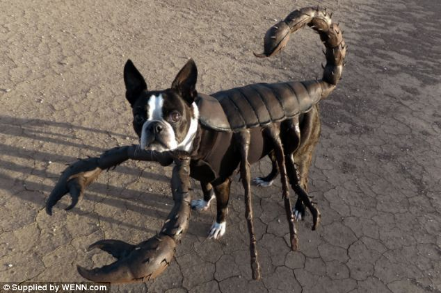 Thai Panda: Look out! Here comes Spider-dog: Terrier with ...
