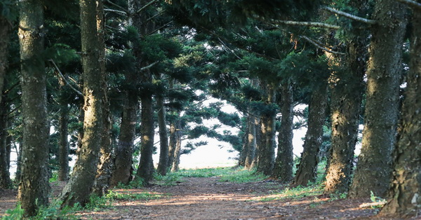 台中沙鹿|九天黑森林|神秘但卻是婚紗照和外拍的熱門景點