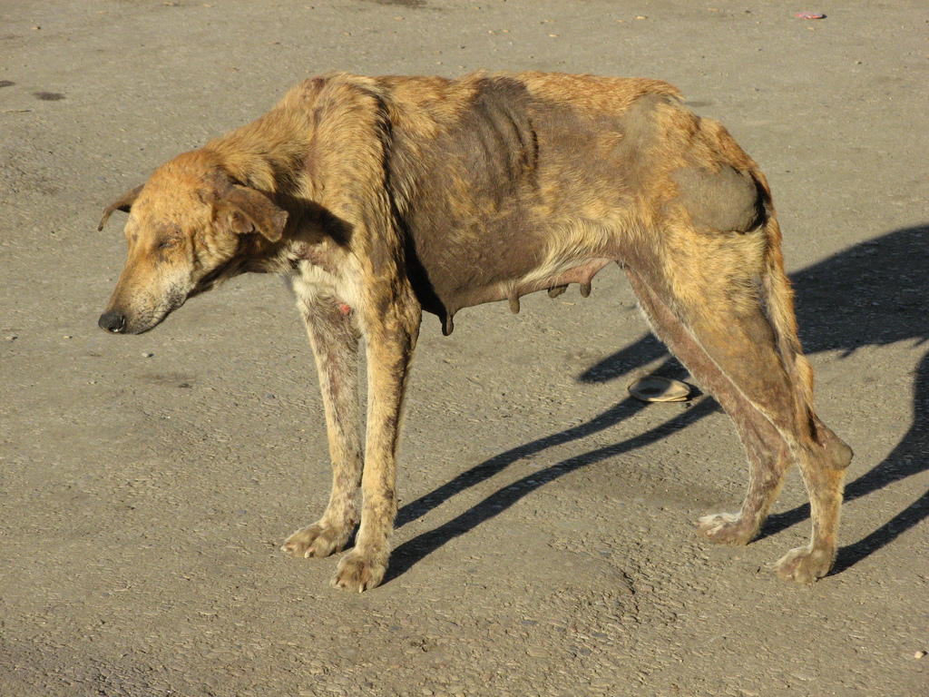 be aware of rabies disease pharm d be aware of rabies disease