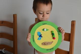 Manualidades. ciclo de la pequeña oruga glotona.
