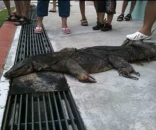 Giant monitor lizard causes stir in HDB estate