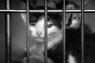 पशुओं के प्रति क्रूरता