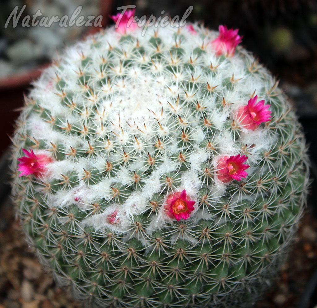 Naturaleza tropical cuidados de las plantas suculentas for Cactus cuidados exterior