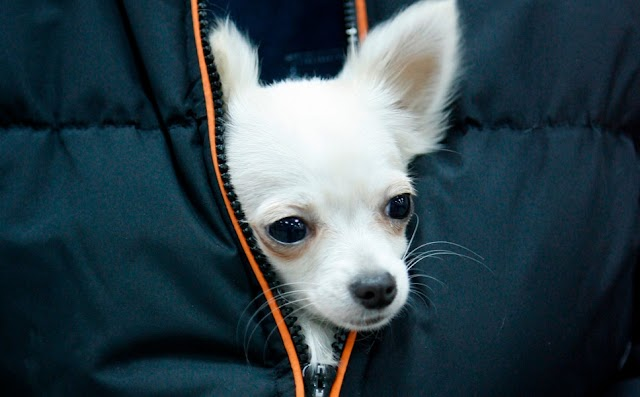 Όποιοι έχουν σκύλο, έχουν αυξημένες πιθανότητες να ζήσουν περισσότερα χρόνια