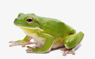 Interpretation of Frogs dream vision