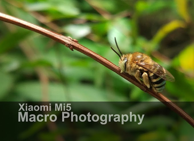 Macro Photography With Xiaomi Mi5 Smartphone