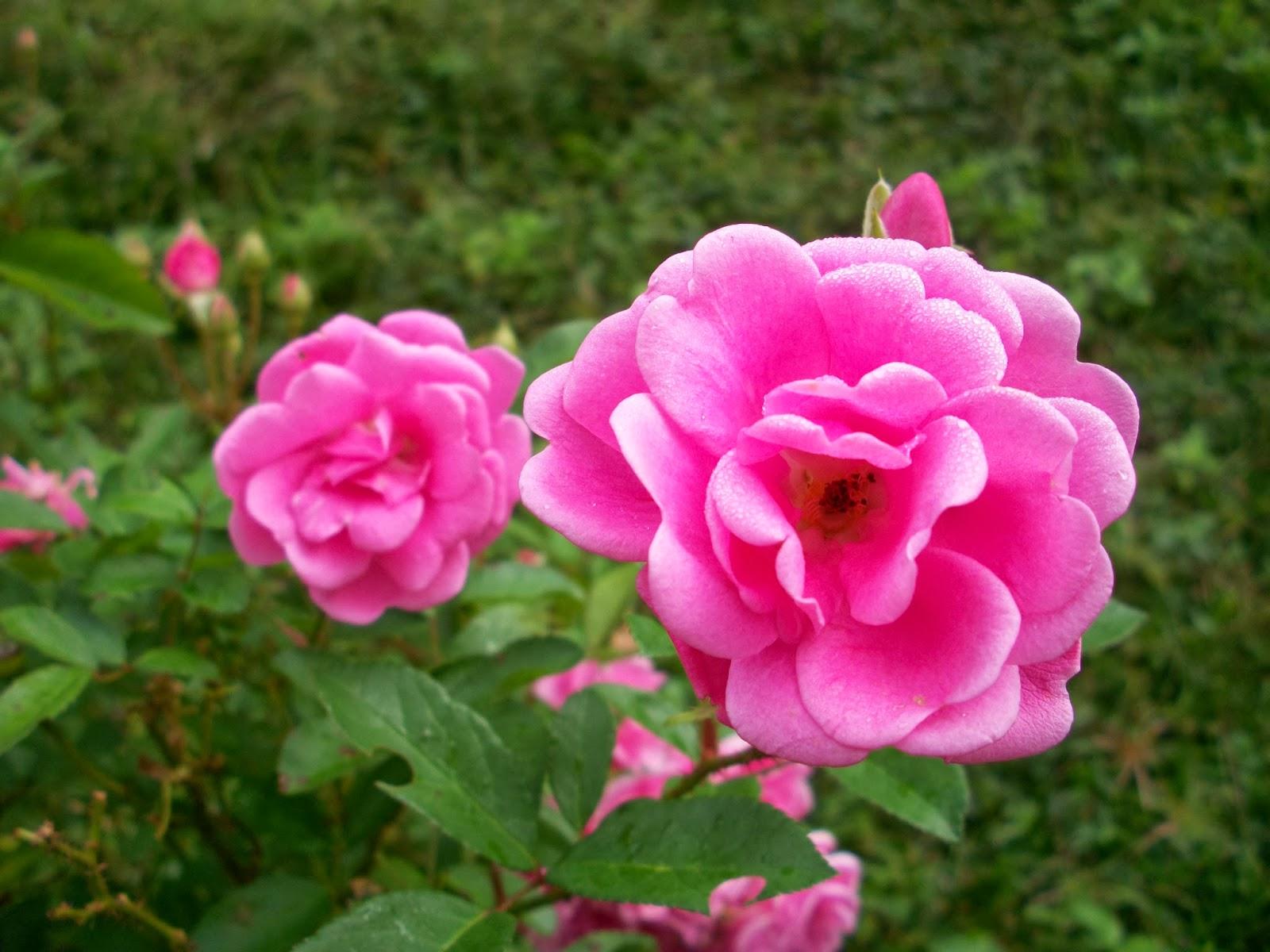 Mulheres SÃo Como Flores: O Blog Dos Apaixonados: Uma Mulher é