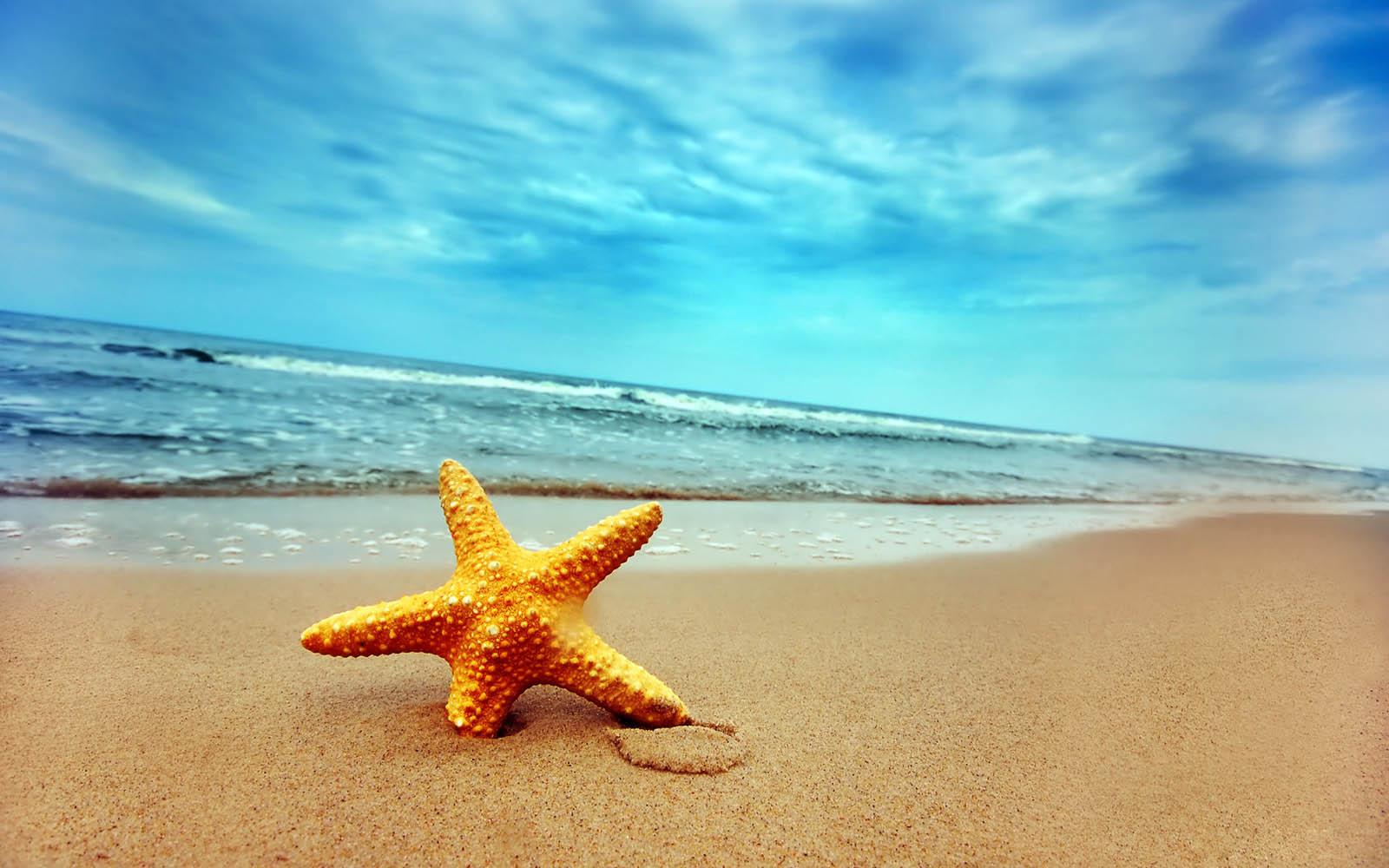 Gambar Gambar Gambar Bintang Laut Wallpaper Jpeg Png Gif Best
