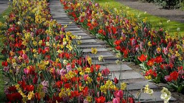 Identificando tulipanes en Keukenhof