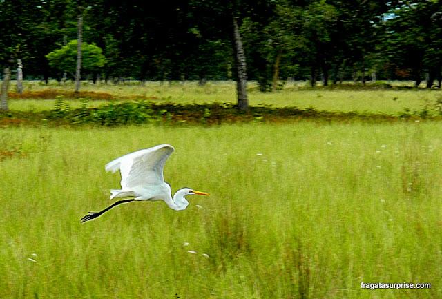 Garça no Pantanal do Mato Grosso