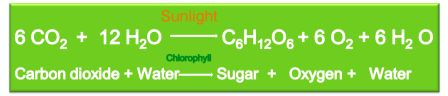 Photosynthesis formula