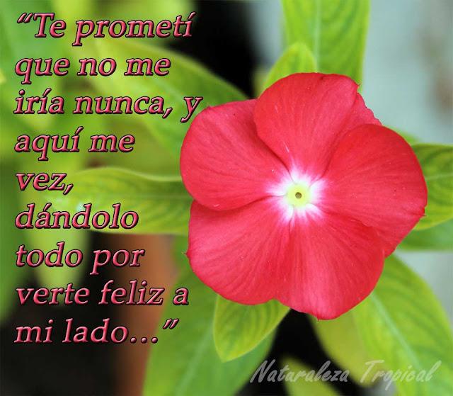 Te prometí que no me iría nunca, y aquí me vez, dándolo todo por verte feliz a mi lado…