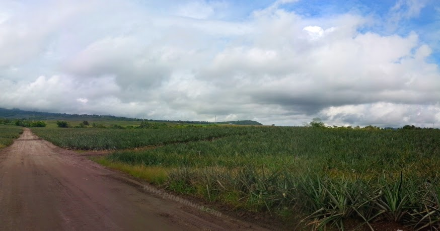 Dole Philippines Pineapple Plantation in Polomolok, South ...