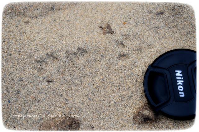 следы-на -песке