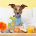 Uslužno čuvanje pasa - Hotel za vašeg kućnog ljubimca u Vrnjačkoj Banji