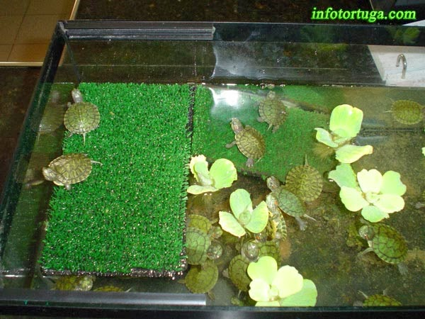 Un Zoo En Casa Rampas Para Acuarios Y Estanques - Como-construir-un-estanque-para-tortugas