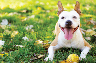 dog with ball lying on grass