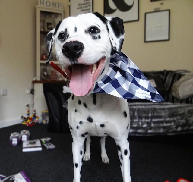 Pretty Little Paws Navy And White Check Design Dog Bandana