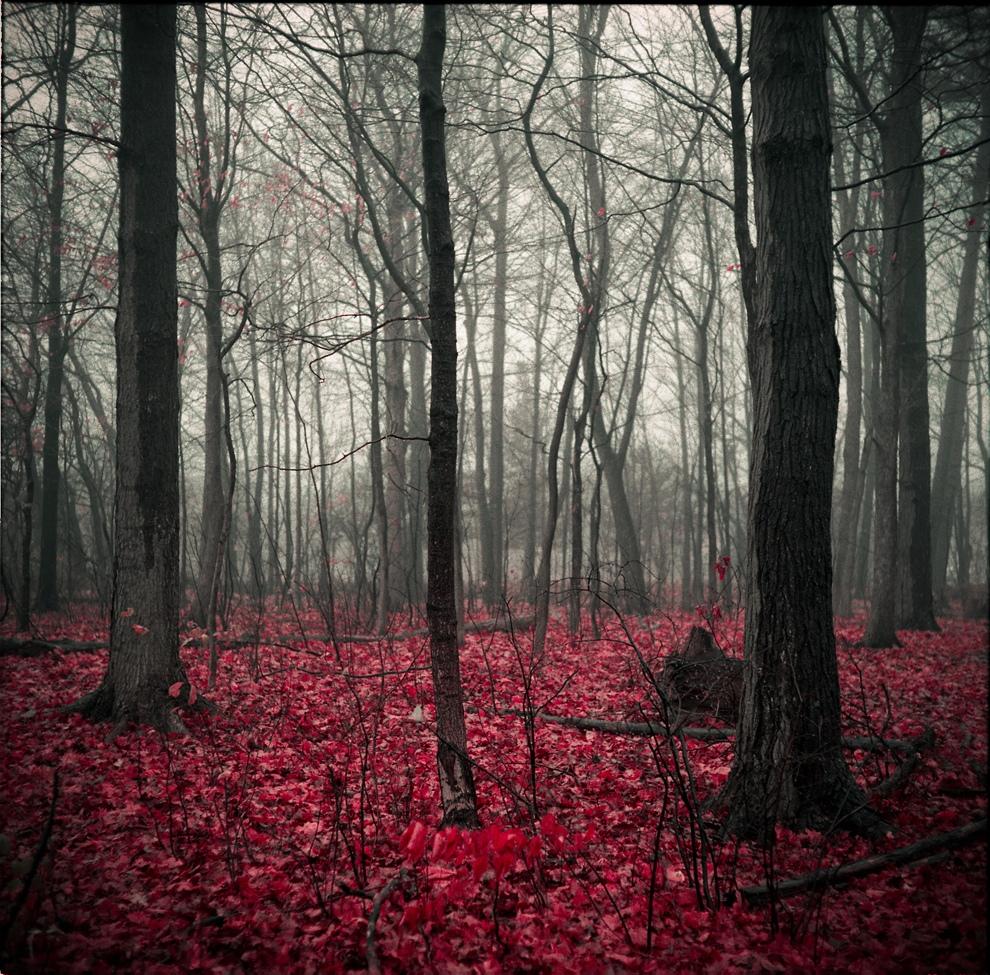 الطبيعة الساحرة في أحد غابات تورونتو في كندا .