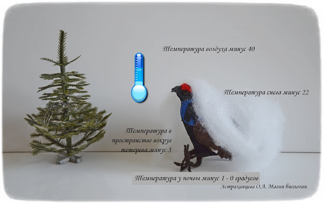 terentij-teterev-i-zhizn-pod-snegom