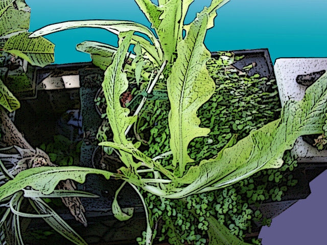 estado cultivo acuaponico