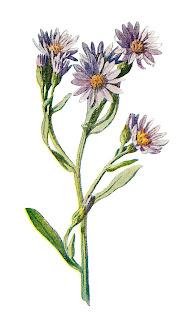 flower wildflower stock digital image clip art botanical illustration