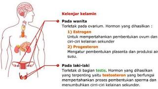 GLA Complex stabilkan hormon