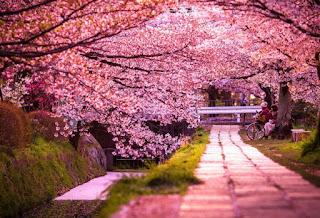 4 Hal yang Harus Dihindari Saat Berlibur ke Jepang