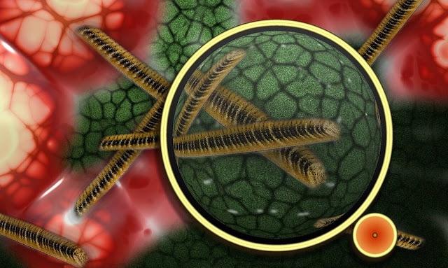Παγκόσμιος τρόμος! Επικίνδυνο μικρόβιο στέλνει στο νοσοκομείο χιλιάδες ανθρώπους
