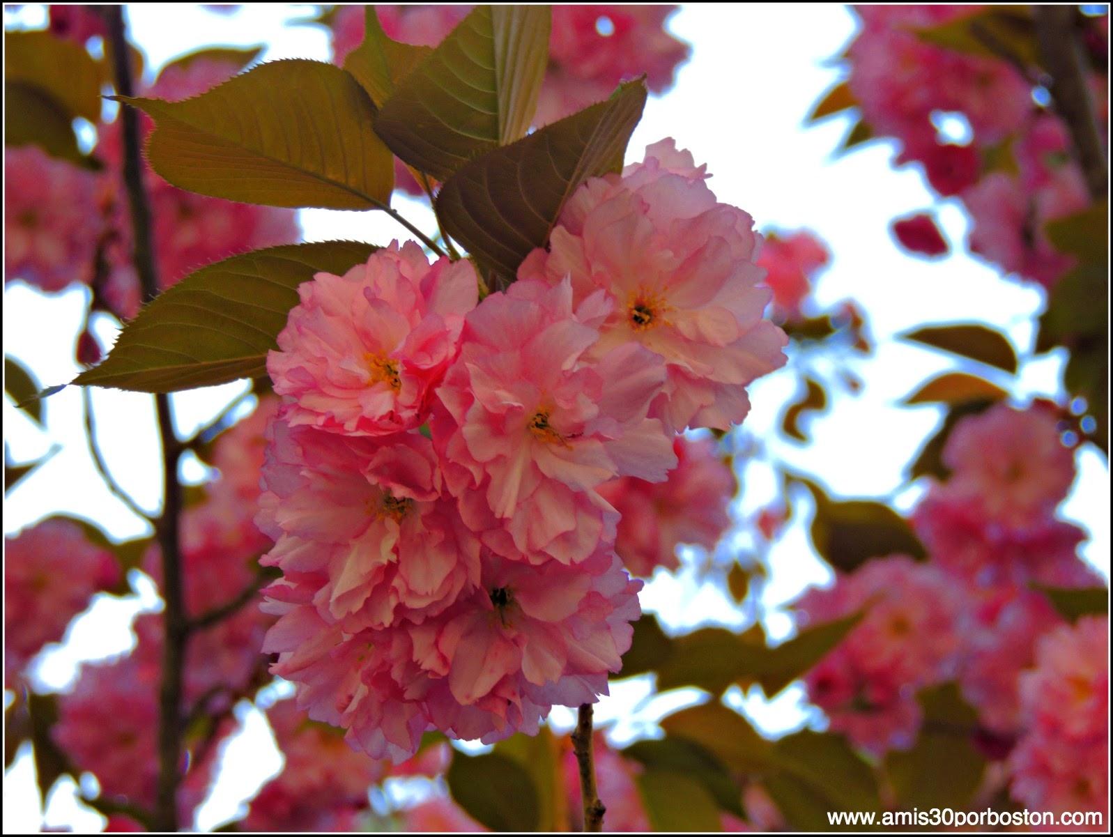 Primavera 2014: Flores