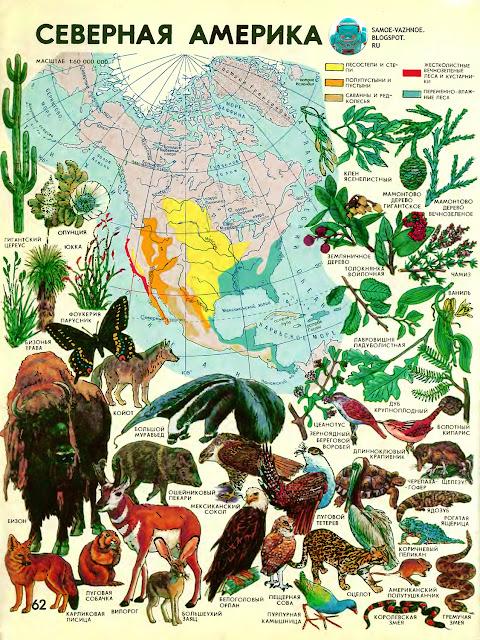 Мир вокруг нас географический атлас для детей 1991 год. Мир и человек полный иллюстрированный географический атлас. Географический атлас мир и человек 1988. Географический атлас для детей мир вокруг нас. Мир вокруг нас атлас читать онлайн. Мир и человек атлас читать. Мир и человек географический атлас читать бесплатно. Географический атлас мир и человек 1988 читать. Мир вокруг нас атлас. Мир вокруг нас любимый детский атлас. Атлас мир и человек читать онлайн. Мир и человек географический атлас бесплатно. Географический атлас мир и человек читать. Мир и человек географический атлас онлайн. Мир и человек книга. Детский атлас мир вокруг нас.