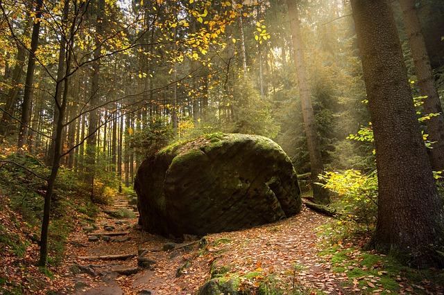 ảnh rừng mùa thu đẹp