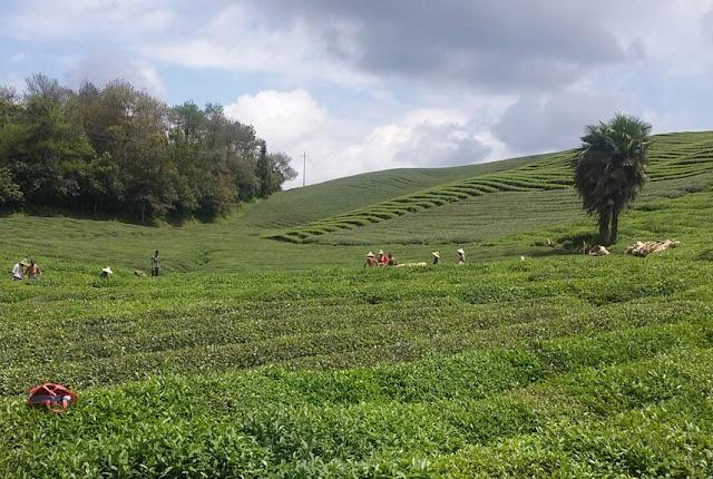 """Im Gespräch mit He Xineng, Bio-Teeproduzent in China: """"In Bio-Tee investierte Zeit und Mühe zahlen sich aus"""""""