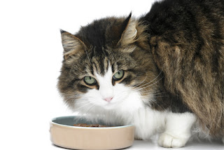 Amazon's private label cat food went on sale earlier this month.