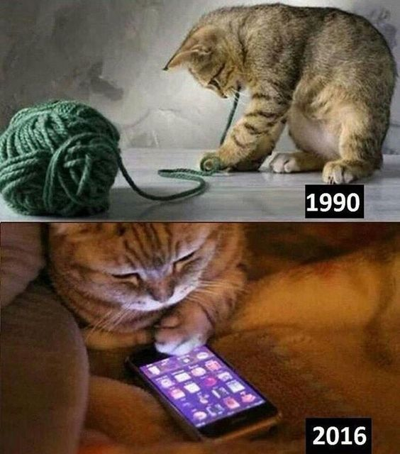 Funny Cats Now and Then 1990 2016 Picture