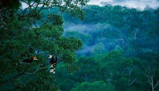 Macam-macam Hutan di Indonesia dan Manfaatnya