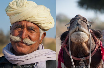 Camel and driver, Rajasthan, India
