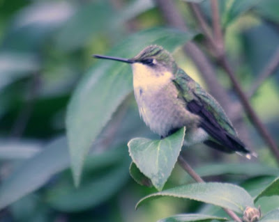 Nature walk in Royal Botanical Garden - The Hummingbird :: All Pretty Things