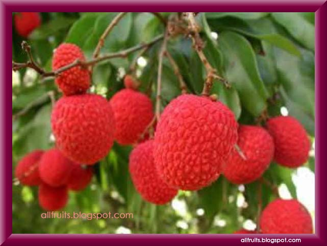 Letter Names Fruit Start L