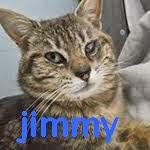 http://animaux76.blogspot.fr/2014/05/jimmy-sorti-de-fourriere-petite.html
