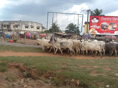 fulani cattlemen block okorocha
