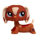 Littlest Pet Shop Small Playset Dachshund (#1631) Pet