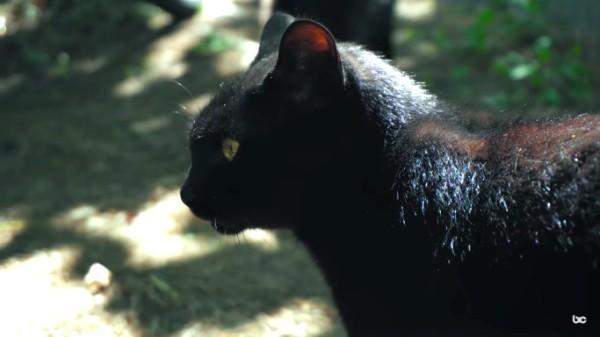 black cats island