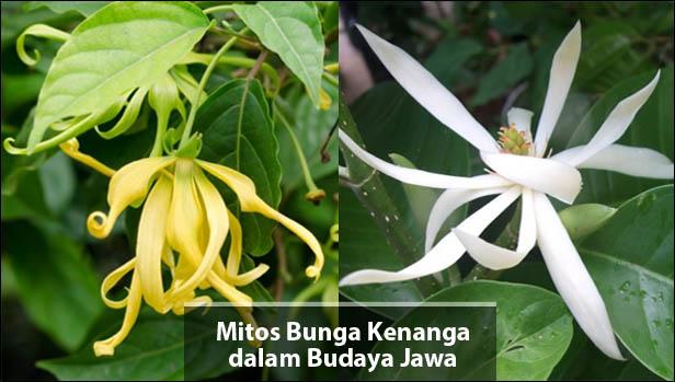 Gambar Bunga Kenanga Putih Gambar Bunga