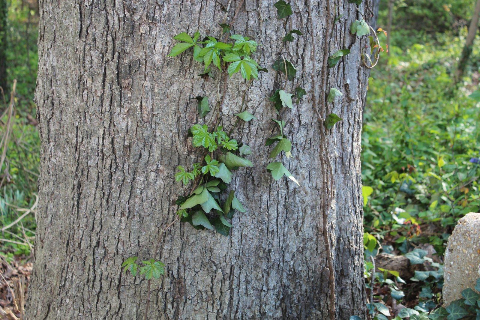 Long Branch Nature Center Virginia