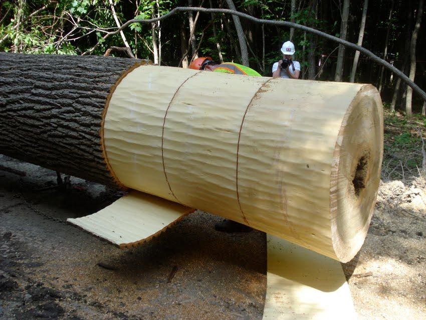 Chop Stick Landscape Voice