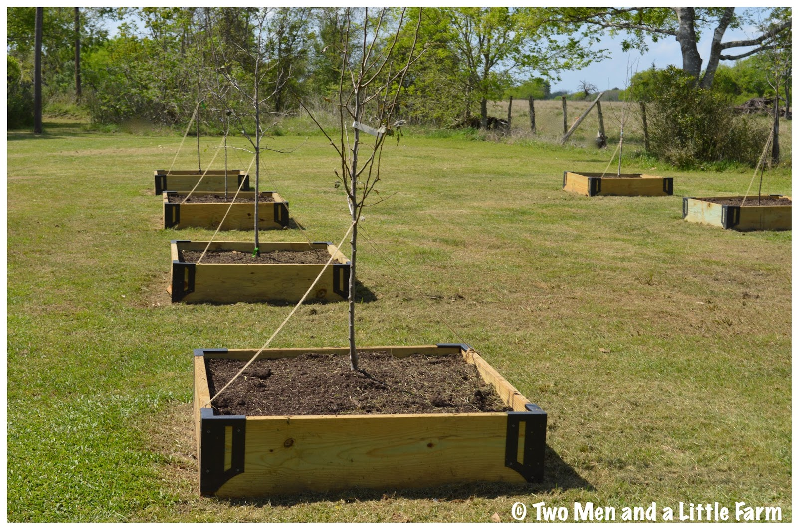 Two Men and a Little Farm RAISED BED ORCHARD