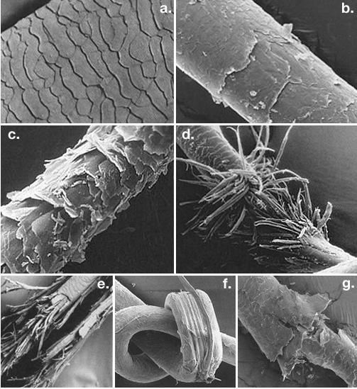 Split ends under the microscope