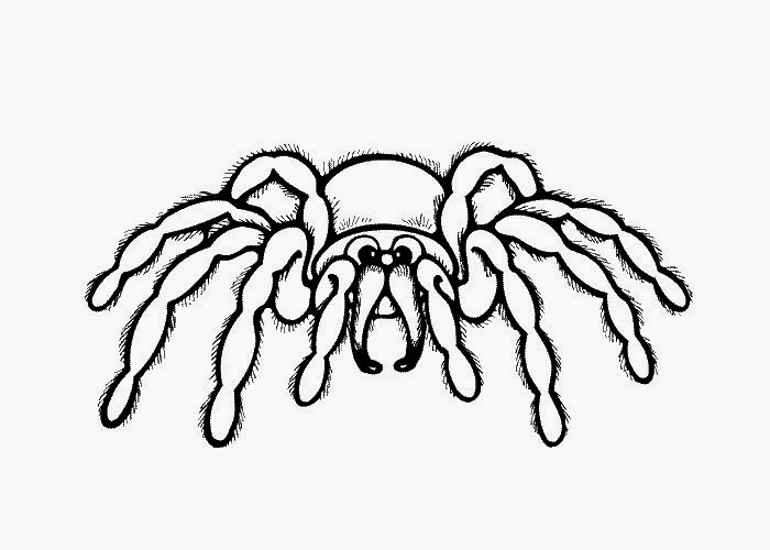 spiders coloring pages for kids - photo#38